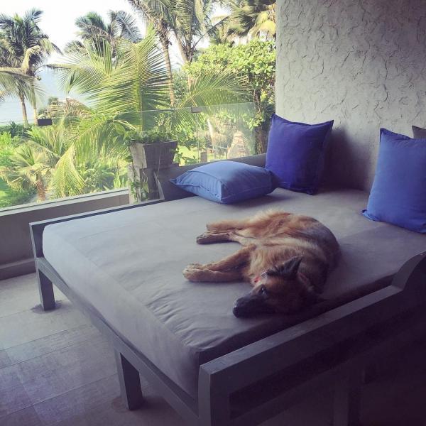 akshay kumar's dog