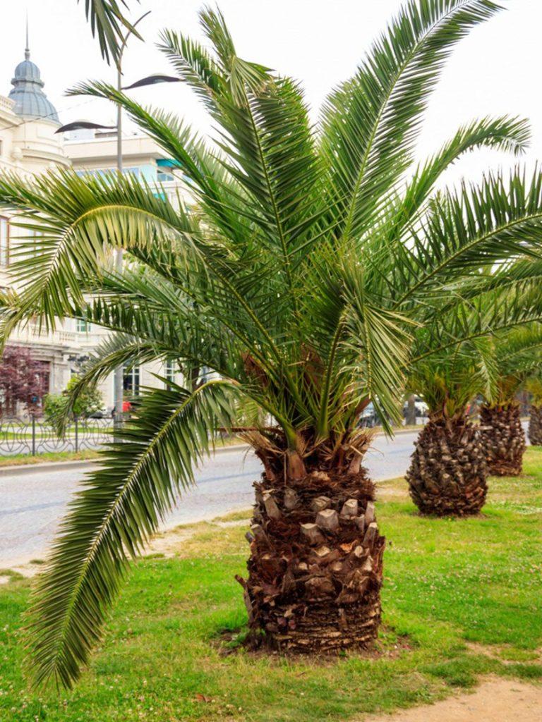 palm trees tropical design